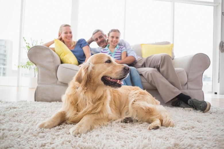family-dog-home